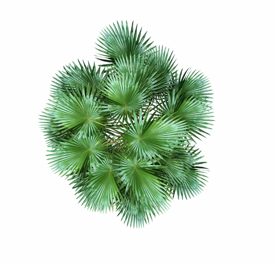 Plant Top View Png Free Plant Top View Png Transparent Images 41983 Pngio