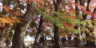 《日本河口湖》起司蛋糕 Cheesecake garden 富士山餅乾 紅葉迴廊