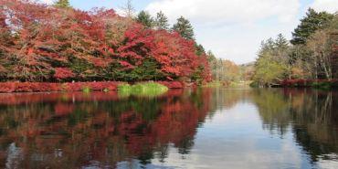 《日本》長野。輕井澤 雲場池 楓葉季之我醉了