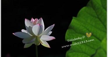 攝影│新竹。靜心湖♥科學園區內的秘密花園,拍荷花最佳去處*