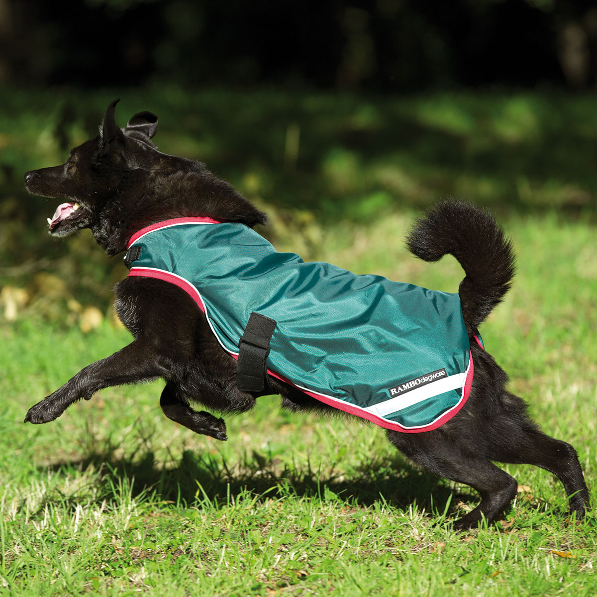 Dog Coats Apparel Dog Cat Products From Smartpak Equine