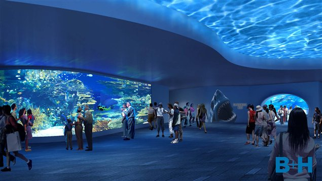 Niagara Falls At Night Wallpaper Ripley S Aquarium Opening Soon In Toronto