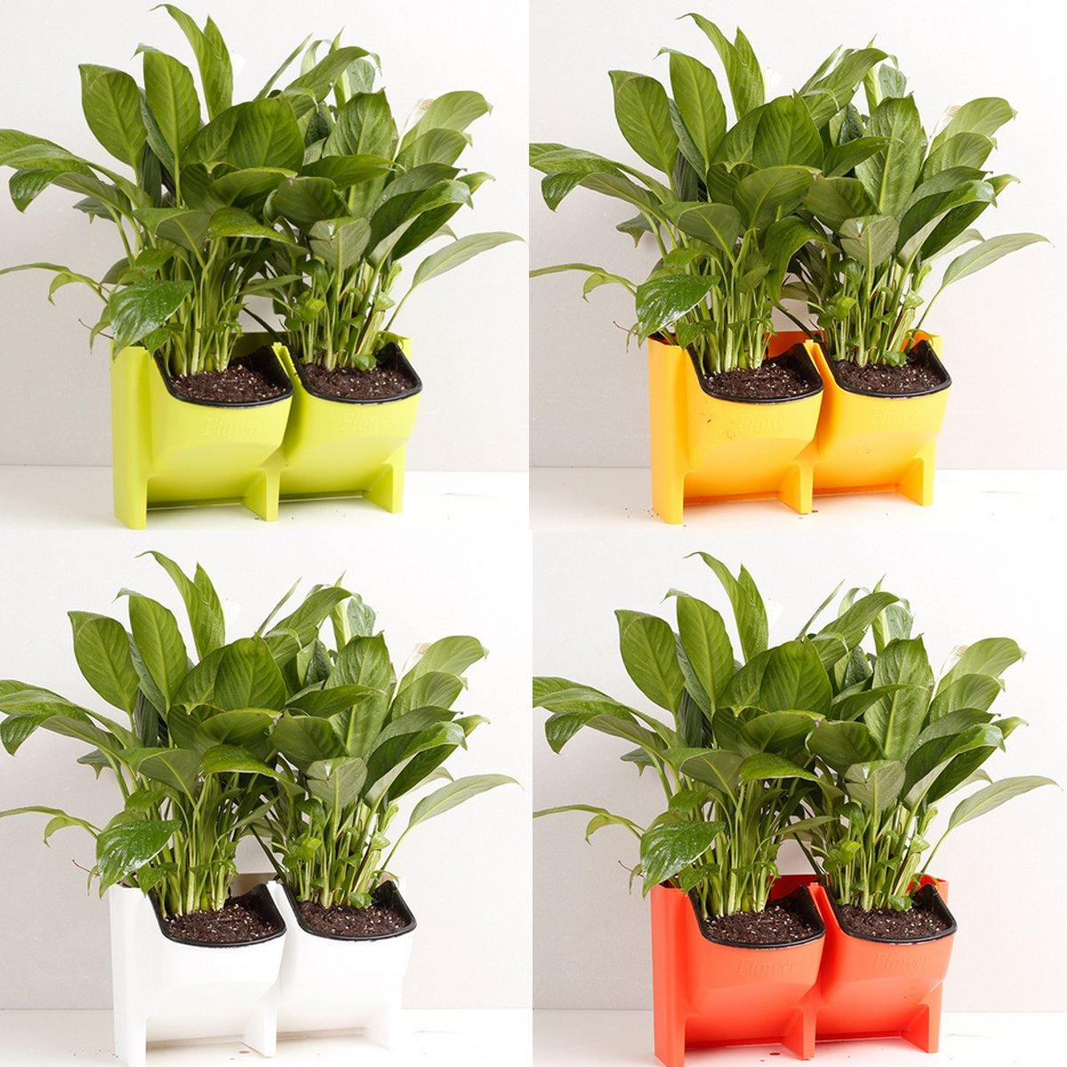 Blumen Im Topf 2 Pocket Vertical Wall Planter Self Watering Hanging Blumen Topf Garten Dekoration