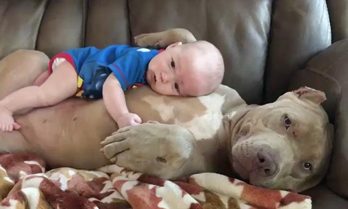 This Pitbull is a doggone good babysitter - Stomp - pet babysitter