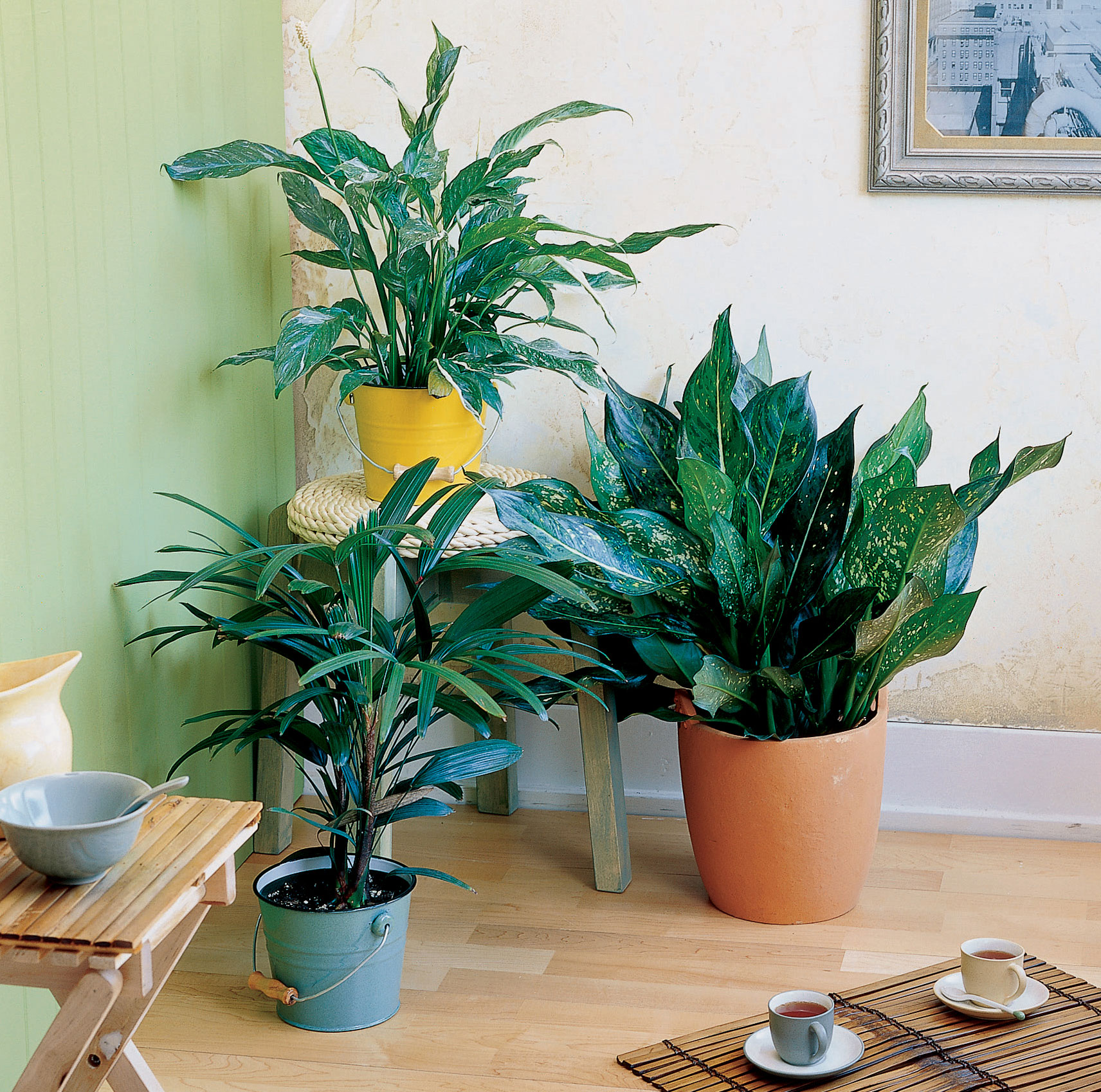 Easy Care Indoor Trees Easy Care Indoor Plants Sunset Magazine