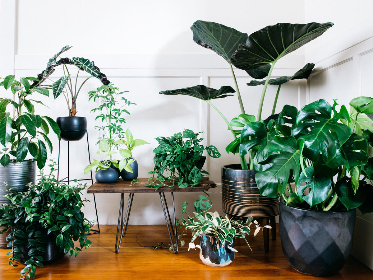 Indoor Plants Ultimate Guide To Indoor Plants Sunset Sunset Magazine