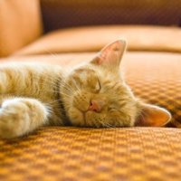 Deterring Cats From Urinating on Furniture | ThriftyFun