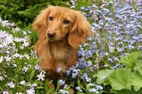 Keeping Dogs Out of Flowerbeds | ThriftyFun