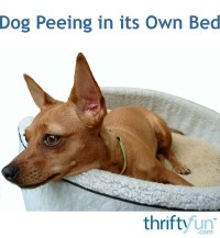 Dog Peeing in Its Own Bed | ThriftyFun