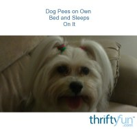Dog Pees on Own Bed and Sleeps On It | ThriftyFun