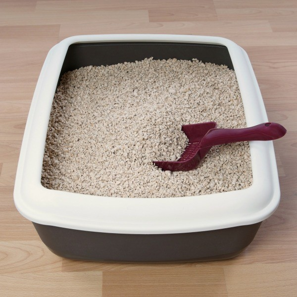 Can I Clean Litter Box While Veterinariancolleges