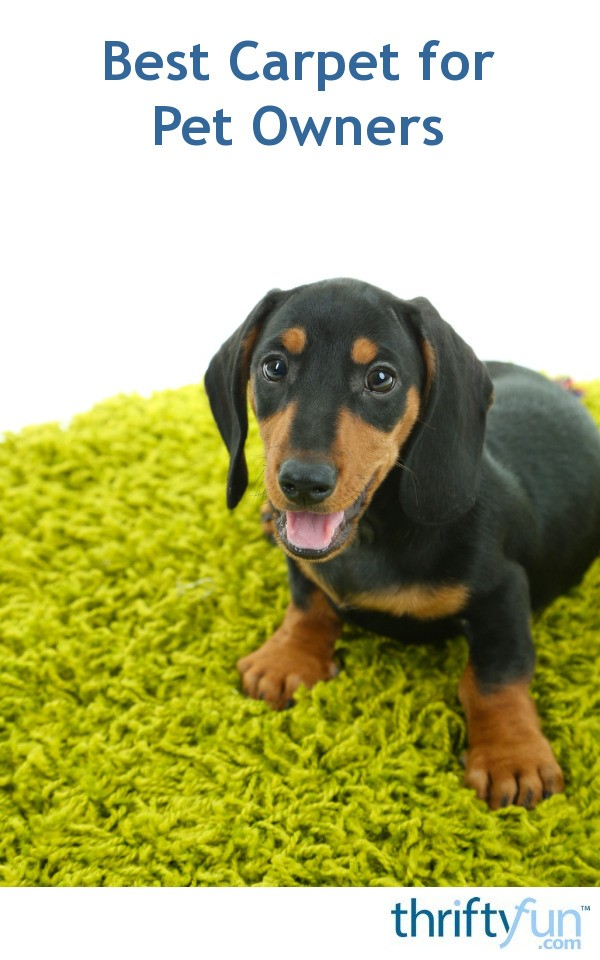 Best Carpet For Pet Owners Thriftyfun