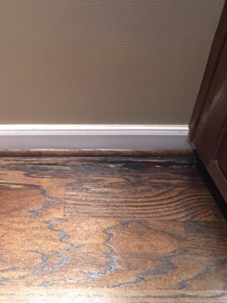 Identifying Cat Urine Stains On Hardwood Floor Thriftyfun