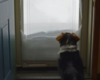 Dog Won't Go to the Bathroom Outside in Bad Weather ...
