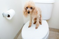 New Dog Not Going to The Bathroom | ThriftyFun