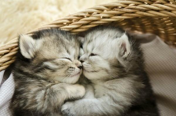 Teaching Kittens To Sleep In Their Own Bed Thriftyfun