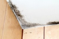 Removing Mold from Painted Walls and Ceiling