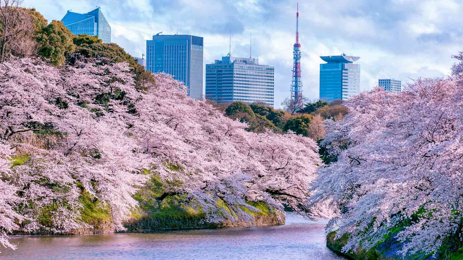 1600x900 Hd Wallpapers Cars 10 Places In Tokyo To See Cherry Blossoms This Spring