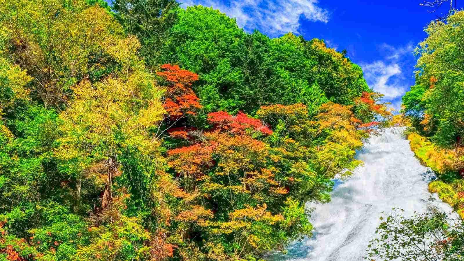 Fall Leaves Road Wallpaper 【닛코】 가을 단풍 명소 추천장소 모음