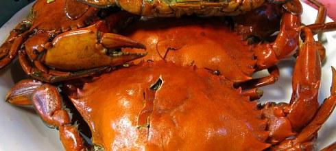 味蕾最愛你:台南三哥海鮮海產(處女蟳)
