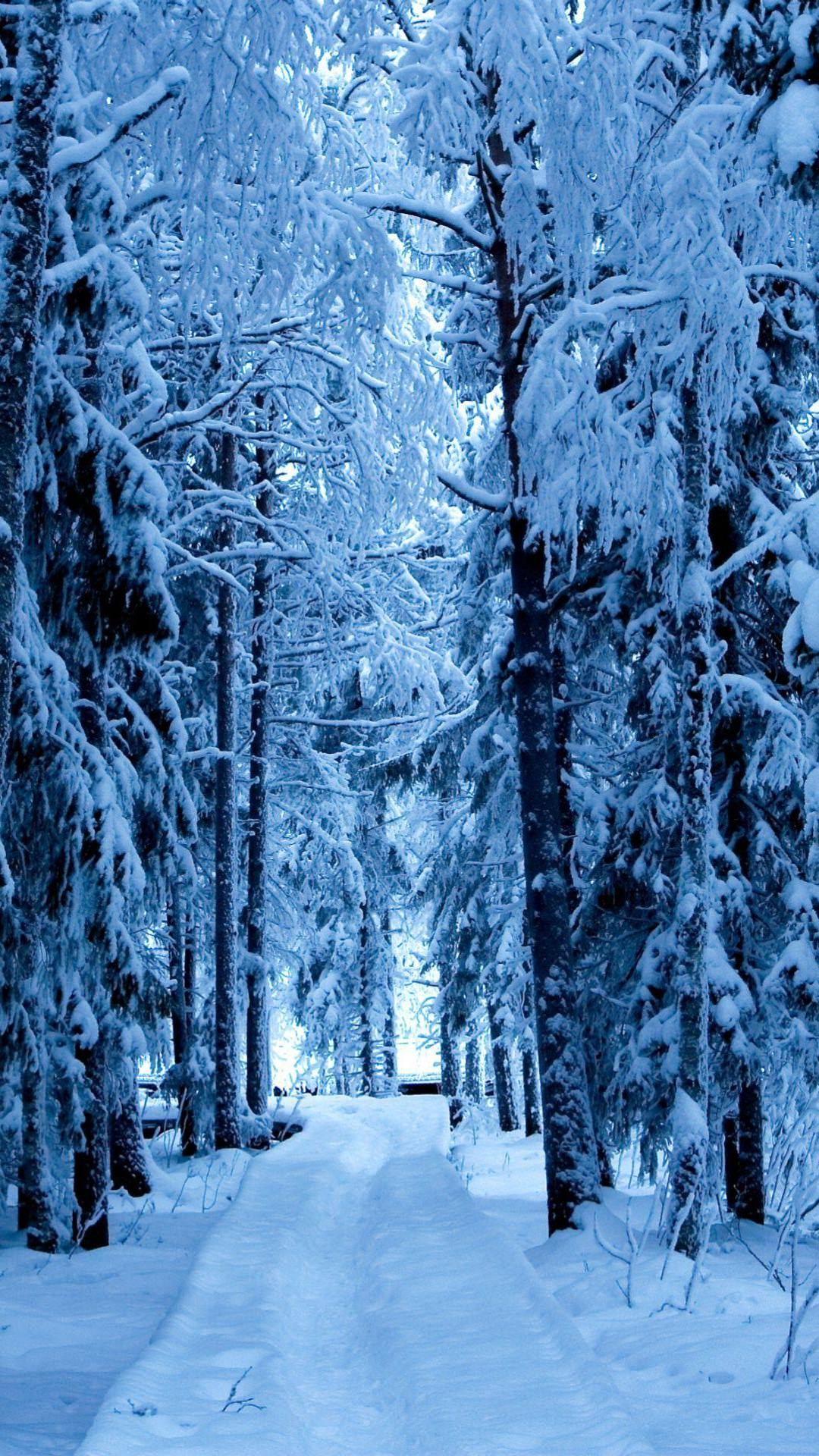 Falling Snow Live Wallpaper For Pc Tree Lined Landscape Snow Wallpaper Sc Smartphone