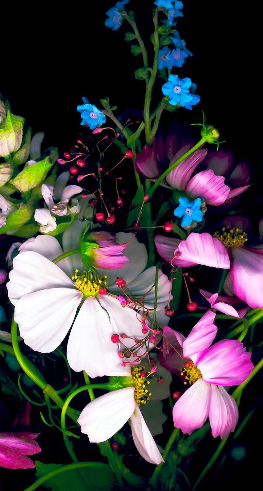Floral Wallpaper For Iphone 5 Colorful Flower Black Wallpaper Sc Iphone6s