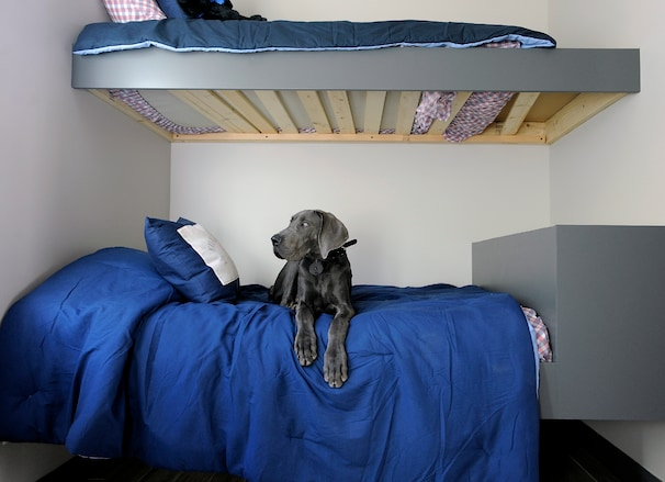 More home builders catering to buyers\u0027 four-legged companions - The