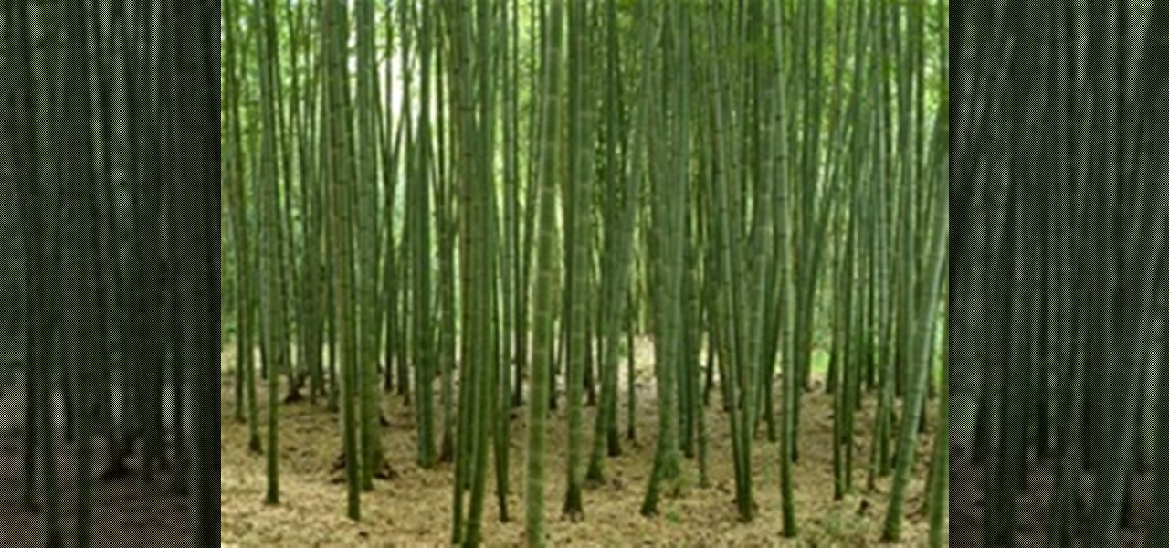 How To Grow Cold, Hardy Running Bamboo « Landscaping