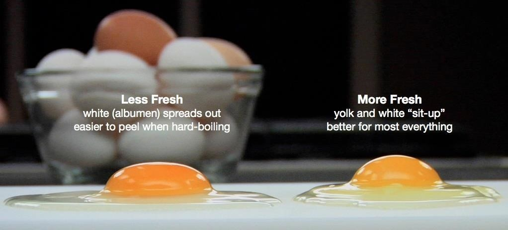 How To Tell If Your 'Expired' Eggs Are Still Good To Eat « Food