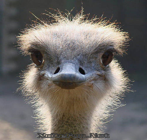 Funny And Cute Wallpapers With Quotes Animal Closeup Natural Beauty Shots Gallery 3