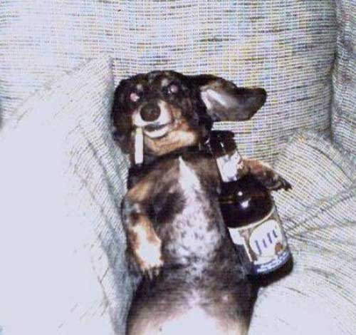 Best Mobile Quotes Wallpapers Drunk Dogs Xcitefun Net