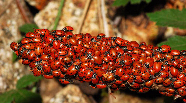 Cute Wallpapers Of Love Hearts Beautiful Ladybugs Xcitefun Net