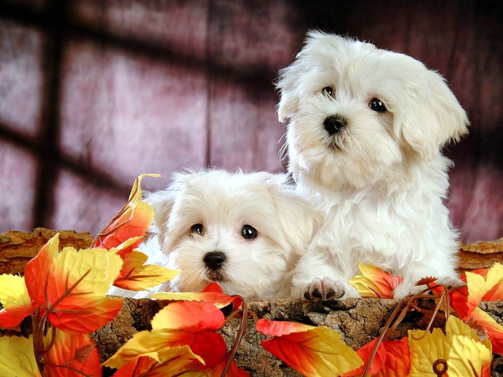 Cute And Funny Babies Hd Wallpapers Fluffy And Cute Puppy Xcitefun Net