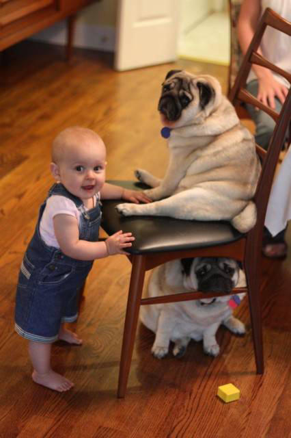 Babies Wallpapers Cute Baby Pictures Cute Baby With The Vodafone Dog Xcitefun Net