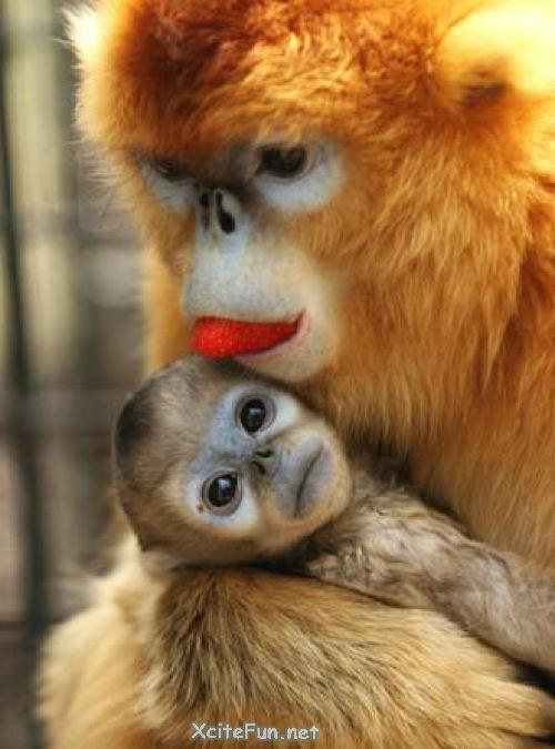 Cute Wallpapers Of Love Hearts How Many Types Of Monkey Lets See Xcitefun Net