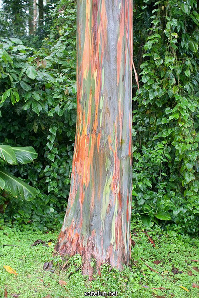 Cute Love Quotes Mobile Wallpapers Nature Painted Tree Rainbow Eucalyptus Xcitefun Net