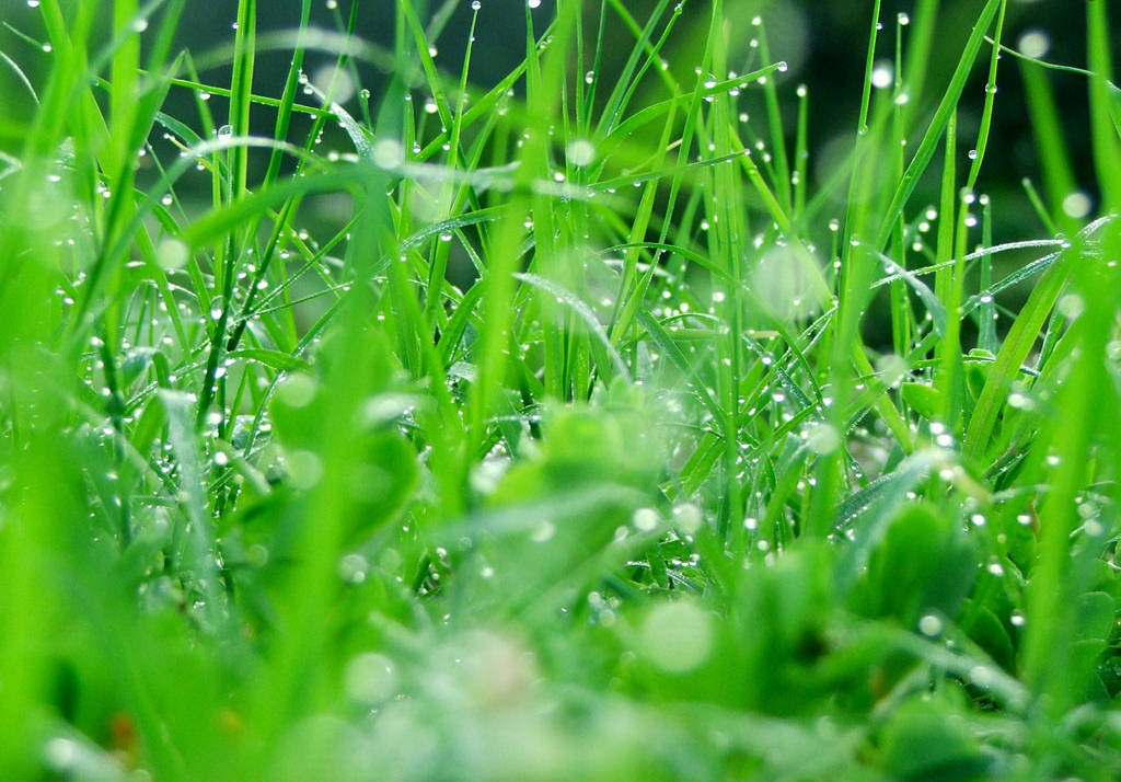 Hd Art Wallpapers For Mobile Summer Refreshing Wallpapers Green Nature Wallpapers