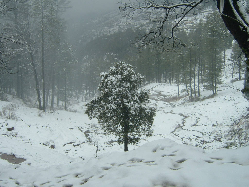 Fall Wallpapers Phone Photography Of Snowfall In Pakistan Xcitefun Net