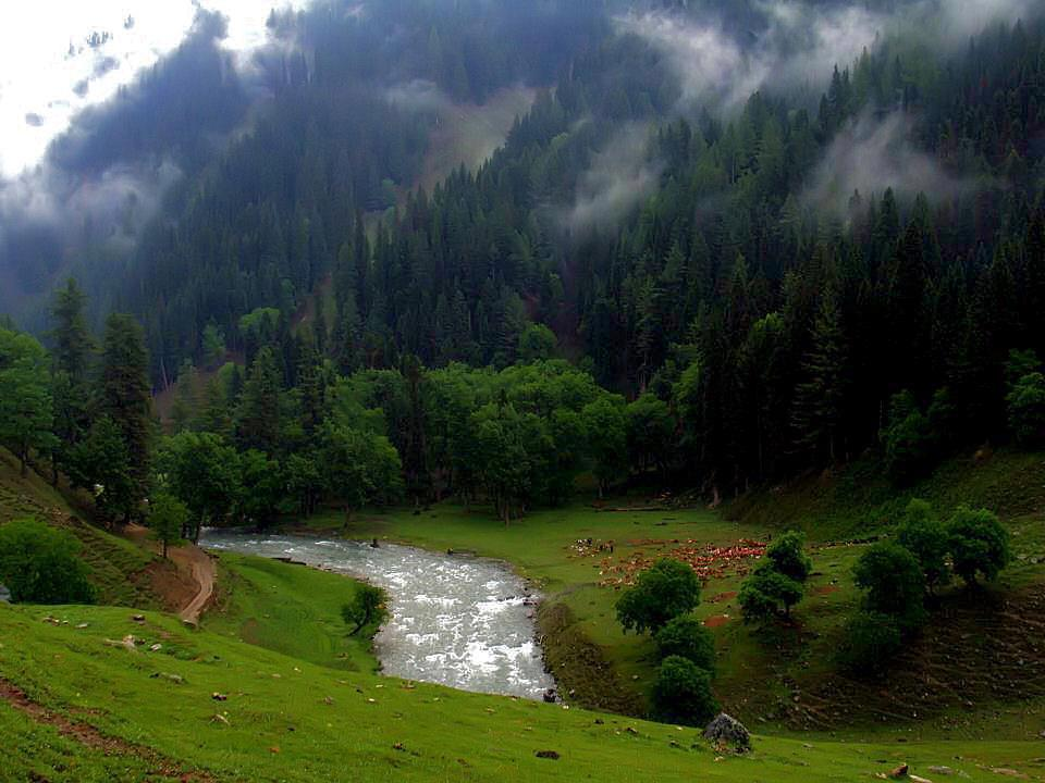 Beautiful Wallpapers Of Flowers With Quotes Taobat Neelum Valley Paradise Beauty Xcitefun Net