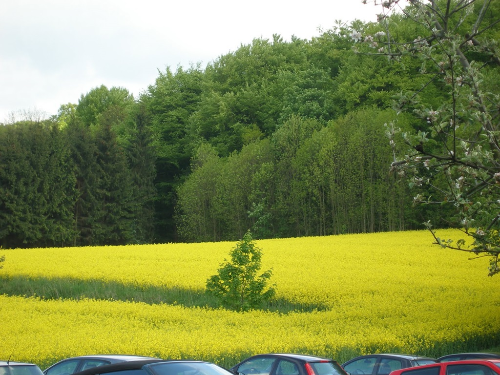 Cute Wallpapers Of Love Hearts Mustard Field Germany Beautiful Scenery Xcitefun Net
