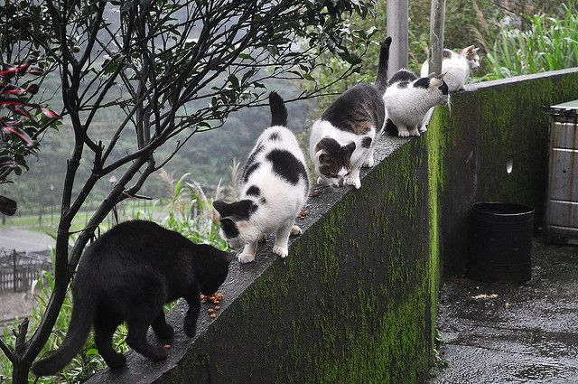 Cute Funny Wallpapers For Mobile Hou Tong The Cat Village In Tapei Taiwan Xcitefun Net