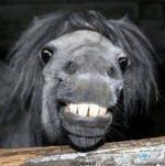 Animal Horse Smile Funny