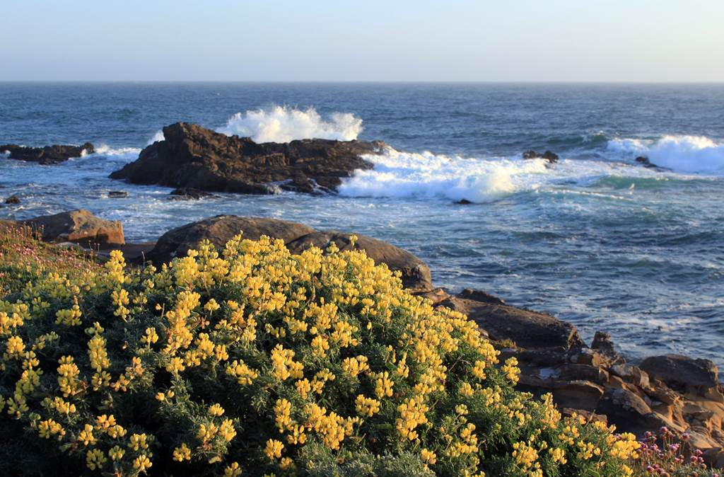 Cool N Cute Wallpapers For Mobile Salt Point State Park California Us Images N Detail