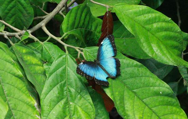 Funny And Cute Wallpapers With Quotes Blue Butterflies In Amazon Rainforest Brazil Xcitefun Net