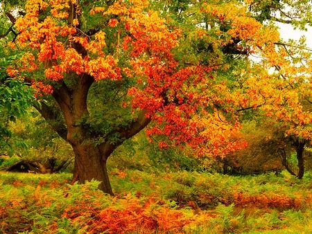 Bollywood Wallpapers With Quotes Beautiful Colorful Nature Xcitefun Net