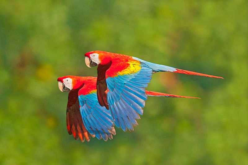 Some Cute Wallpapers With Quotes Parrots Flying In The Rainforest Xcitefun Net