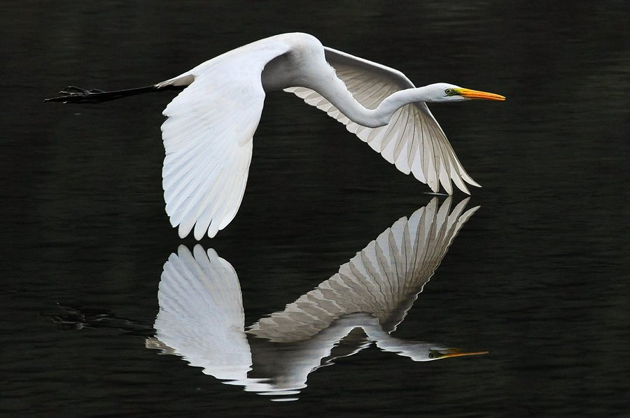 Download 3d Moving Wallpapers For Desktop Animals Reflection In The Water Xcitefun Net