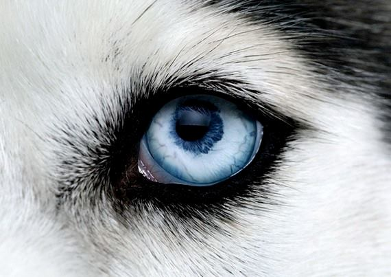 Apps For Quotes Wallpapers Closeup Of Animal Eyes Xcitefun Net