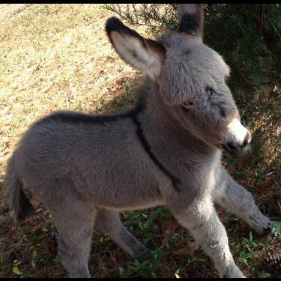Sweet And Cute Wallpapers For Mobile Cute Baby Donkey Xcitefun Net