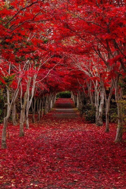 Cute Romantic Babies Wallpapers Colorful Pathways For Romantic Walk Xcitefun Net
